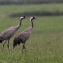 Fewo3, 16 Vögel in der Umgebung