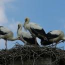 Fewo3, 18 Vögel in der Umgebung