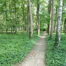 Der Spazierweg um den Brüssower See 2
