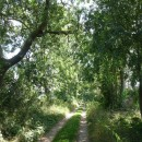 Spaziergang am Brüssower See